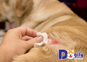 Các loại hình điều trị bệnh viêm da ở chó