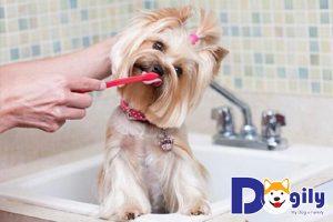 Cách đánh răng cho chó hiệu quả và đúng cách