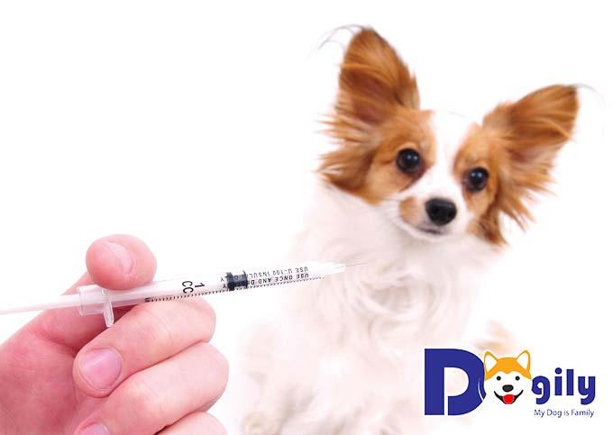 Cách tiêm cho chó ở ven