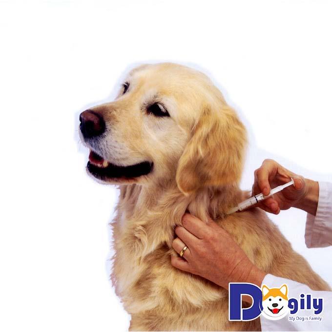 Cách tiêm cho chó