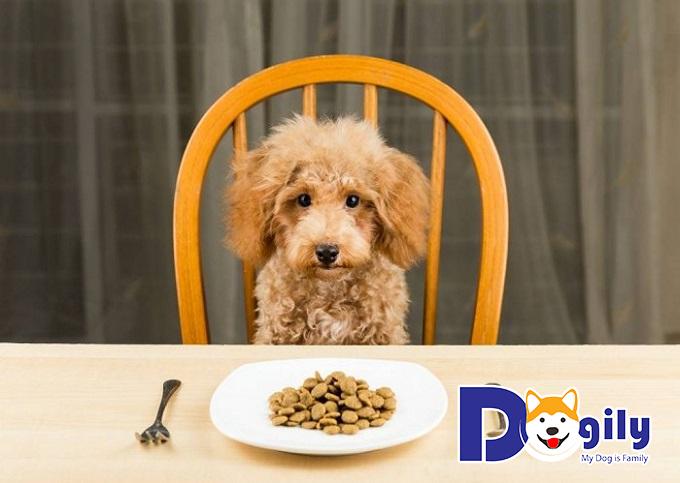 Cần cho chó cưng ăn chín, uống sôi và thức ăn đầy đủ dinh dưỡng