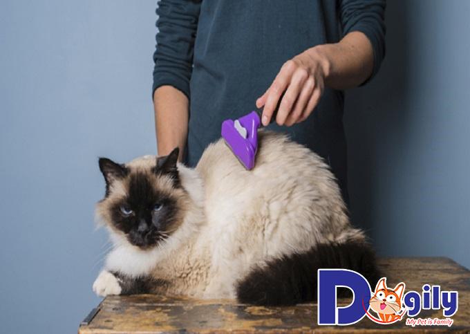 Cần duy trì tình trạng sức khỏe tốt cho mèo cưng