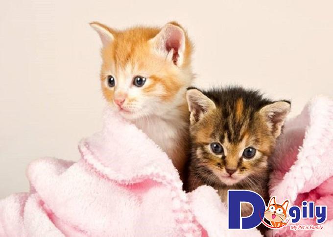 Chăm sóc mèo con từ 6 đến 10 tuần tuổi đúng cách