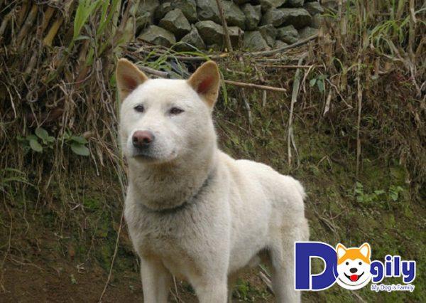 Chó Mông Cộc sở hữu rất nhiều đức tính quý giá