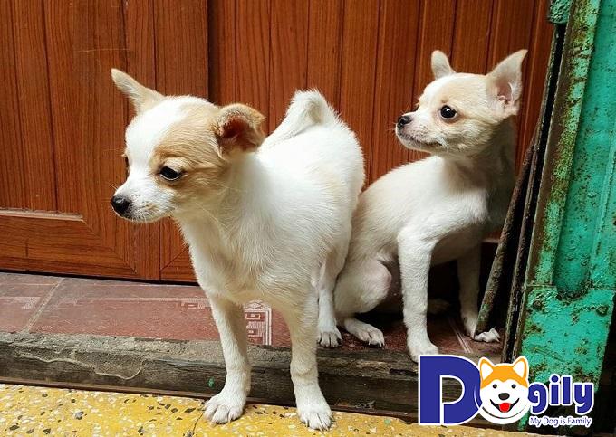 Chó cưng hay mắc các bệnh về da, tiêu hóa, cảm lạnh,...cần được chăm sóc kỹ