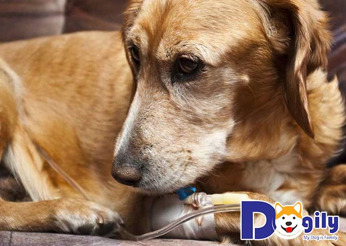 Chó mắc bệnh đường ruột là bởi nhiều nguyên nhân khác nhau