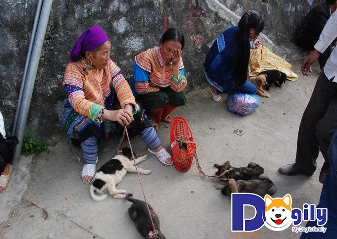 Dogily và sứ mệnh phát triển giống chó Mông Cộc tại Việt Nam hiện nay