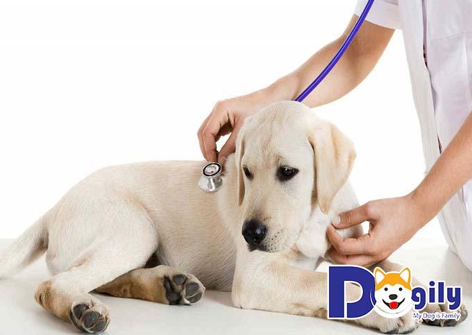 Đưa chó đi gặp bác sĩ thú y