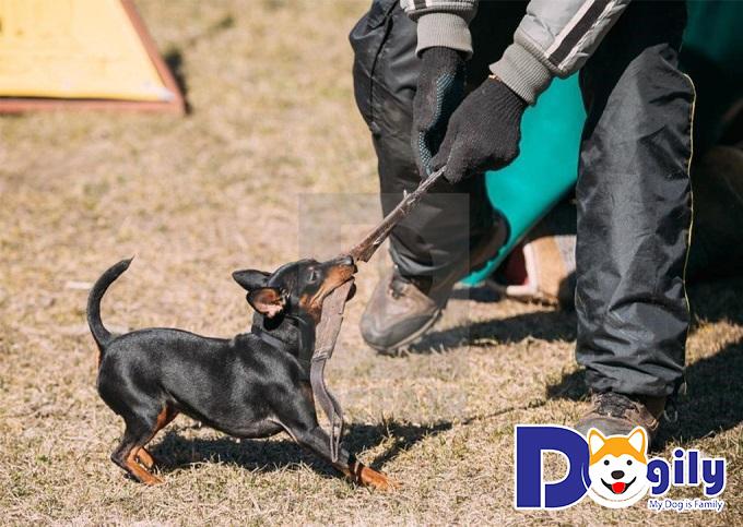 Lựa chọn địa chỉ mua chó cưng chất lượng, thương hiệu uy tín và đáng tin cậy
