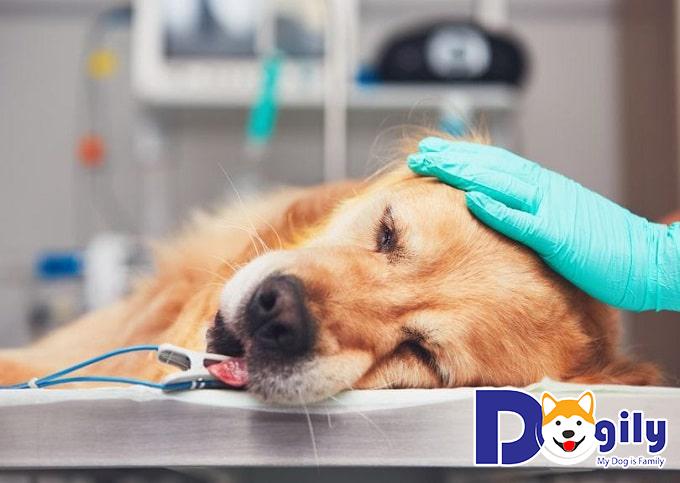 Mắc bệnh khiến các bé cần nhiều sự trợ giúp từ các bác sĩ thú y