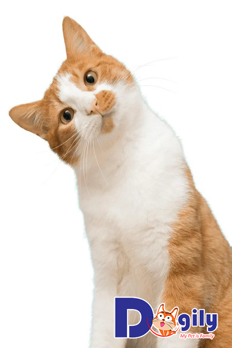 """Mèo là vật nuôi được nhiều """"con sen"""" ưa chuộng"""
