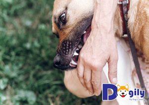 Nhanh chóng sơ cứu cho người bị chó dại cắn