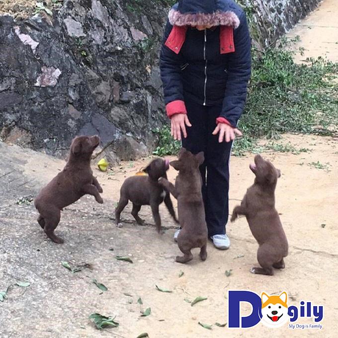 Những chú chó chuyển động nhanh nhạy và di chuyển dễ dàng trong mọi địa hình