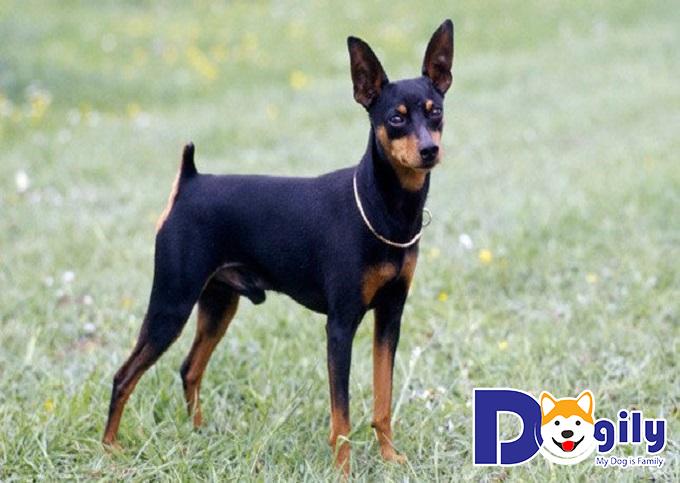 Quyền lợi của khách hàng khi mua thú cưng tại Dogily