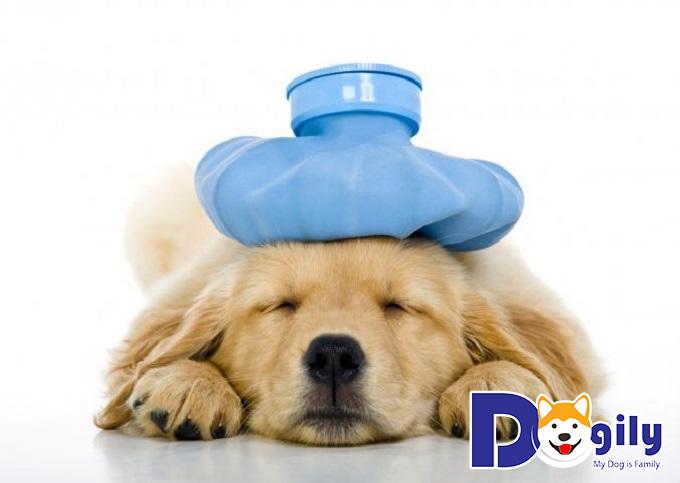 Tác nhân gây ra bệnh lepto ở chó