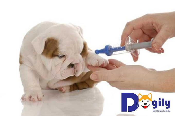 Triệu chứng bệnh lepto ở cún yêu