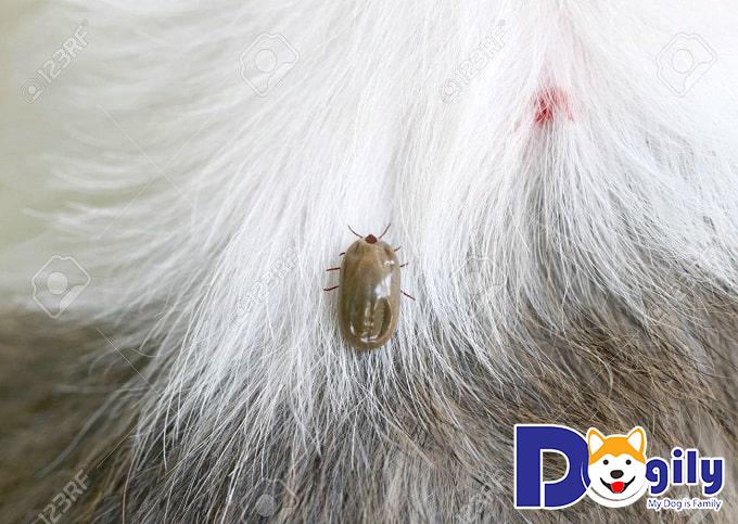 Ve chó thường khiến các bé cảm thấy ngứa và đau rátVe chó thường khiến các bé cảm thấy ngứa và đau rát