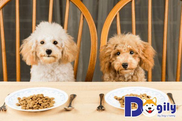 Bữa ăn của 2 chú chó Poodle
