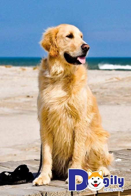Các bước chuẩn bị tiêm cho chó