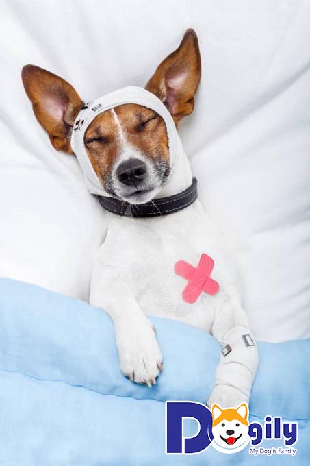 Cách điều trị chó bị viêm phổi