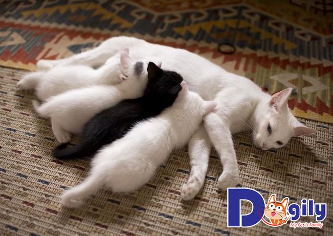 Mèo con được 35 ngày là có thể tách sữa