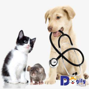 Chẩn đoán bệnh Care ở chó qua các triệu chứng