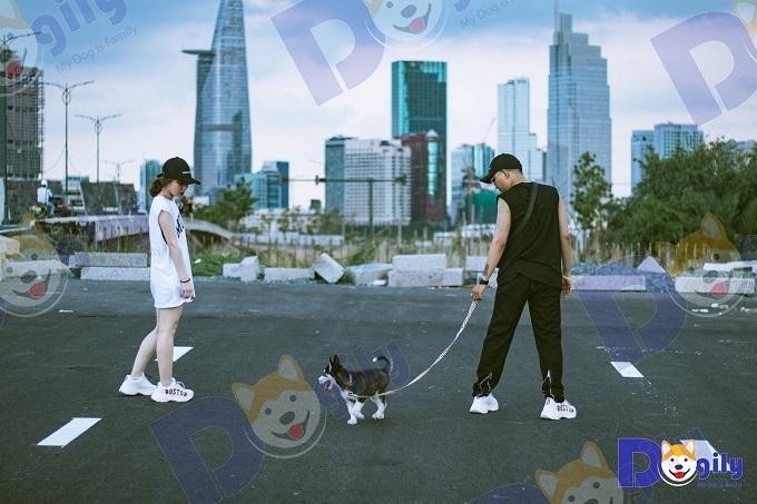 Chó Husky của Dogily bán cho Youtuber Xuân Thảo Vlog ở Sài Gòn.