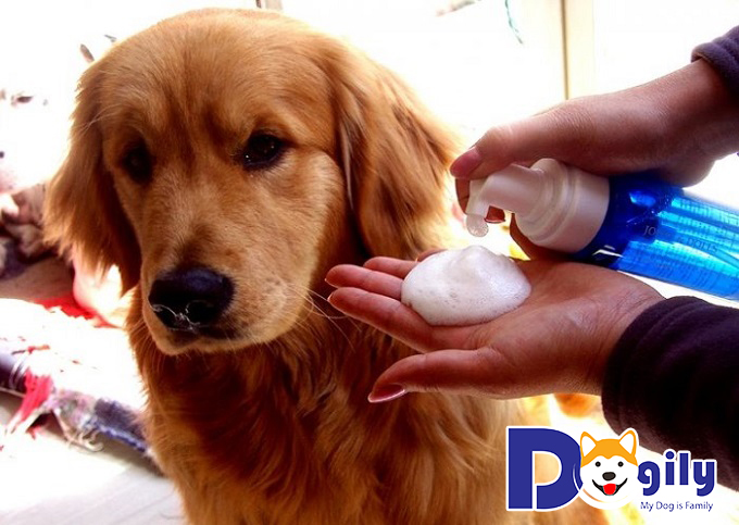 Demodex là một dạng bệnh ghẻ ở chó