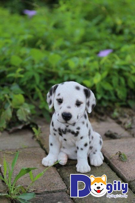 Điều trị bệnh Parvo ở chó hiệu quả