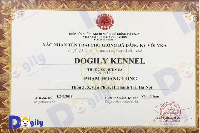 Giấy chứng nhận thành viên Hiệp hội những người nuôi chó cảnh giống tại Việt Nam (VKA) của Trang trại chó Alaska Dogily Kennel.