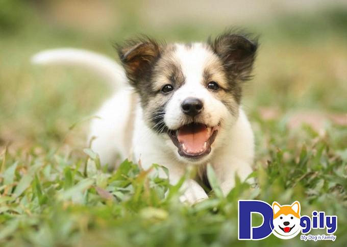Hãy đặt một cái tên thật hay và dễ nhớ cho cún