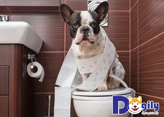 Bạn cần tìm hiểu thói quen đi vệ sinh của cún