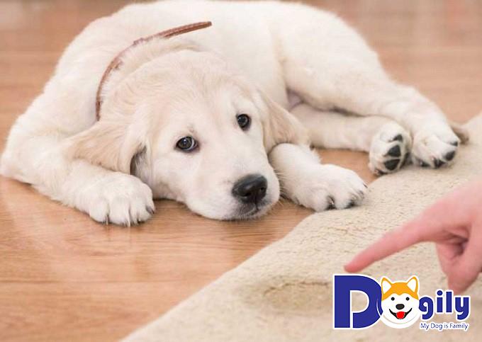 Cần có biện pháp răn đe khi cún đi vệ sinh bừa bãi