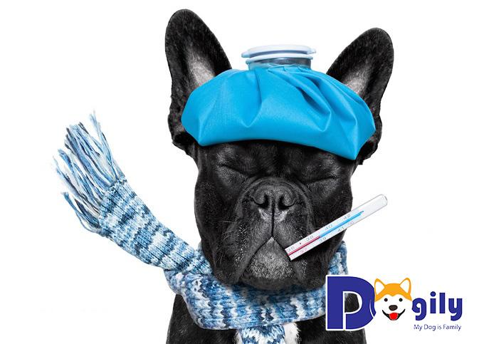 Làm thế nào phát hiện chó bị bệnh