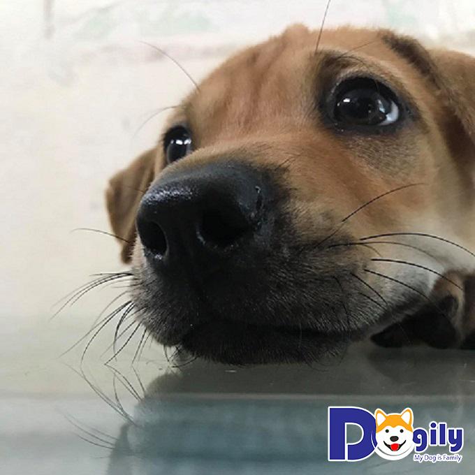 Phương pháp điều trị bệnh Parvo ở chó