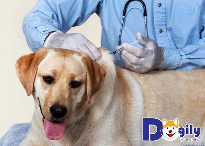 Tiêm vacxin cho chó