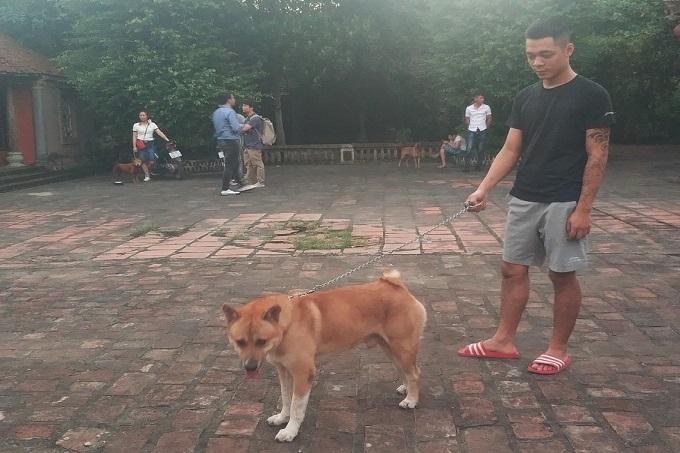 Toàn bộ ê-kíp từ chối xác nhận đâu là chú chó đảm nhận vai cậu Vàng - Ảnh: Mi Ly