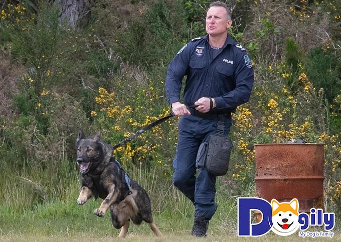 Becgie Hà Lan được huấn luyện với nhiệm vụ bảo vệ an toàn cho Tổng thống