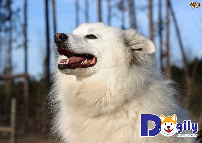 Eskimo được đánh giá cao về chất lượng