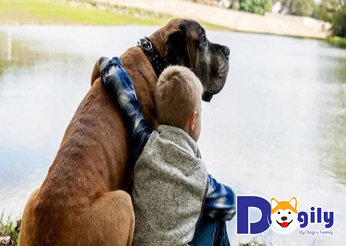 Gia đình có trẻ nhỏ cần để ý và không nên lơ là khi cho chó cưng cỡ đại chơi cùng