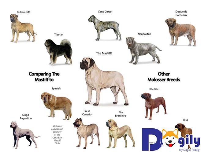 Giả thuyết về nguồn gốc tổ tiên của giống chó Ngao ở Anh