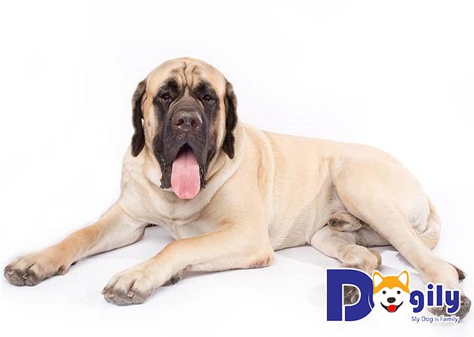 Mách bạn cách chăm sóc lông và răng tại nhà cho chó cưng