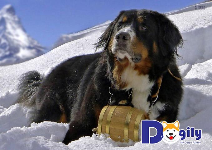 Chó được huấn luyện làm nhiệm vụ gì