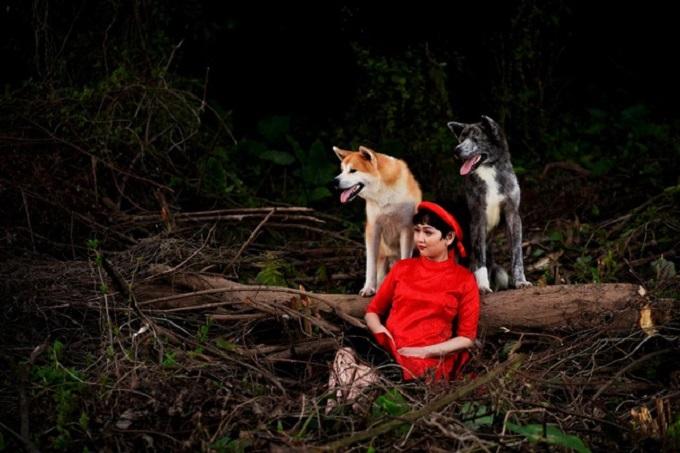 Hai chú chó giống Akita Inu nhập khẩu châu Âu của Dogily Petshop