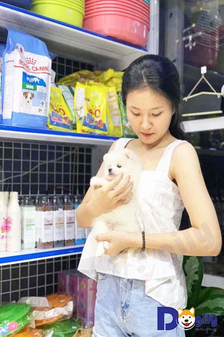 Ảnh: khách hàng mua chó Phốc sóc tại Dogily Pet shop Phú Nhuận.