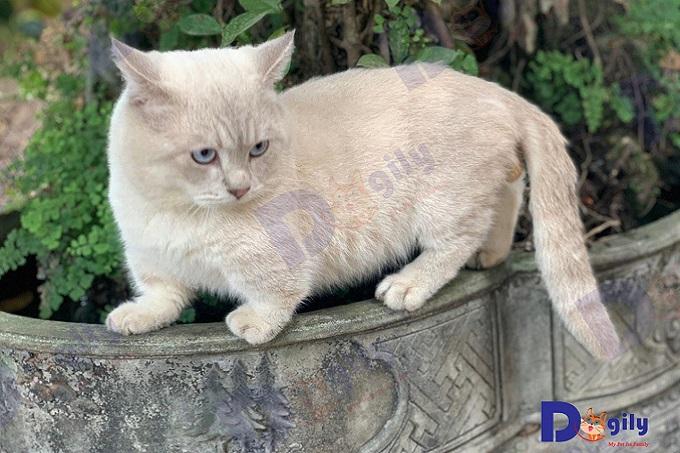 Với đôi chân ngắn, mèo Munchkin không có khả năng nhảy cao. Tuy vậy, chúng rất thích nằm nghỉ ngơi ở những vị trí trên cao. Vì vậy, từng bước, từng bước, giống mèo này có thể chinh phụ những vị trí mà chúng muốn tới. Vấn đề chỉ là thời gian...