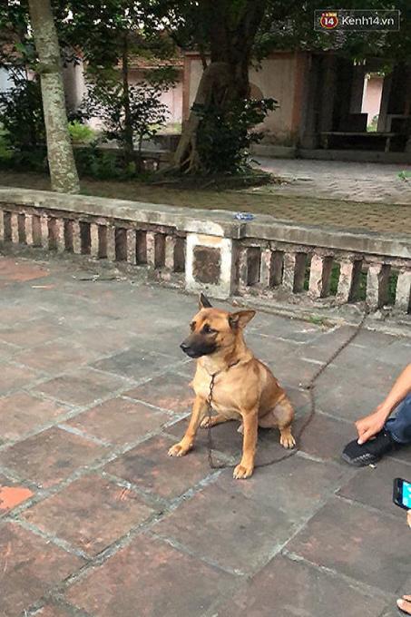 Chú chó được lệnh nên ngồi nghiêm nghị diễn sâu