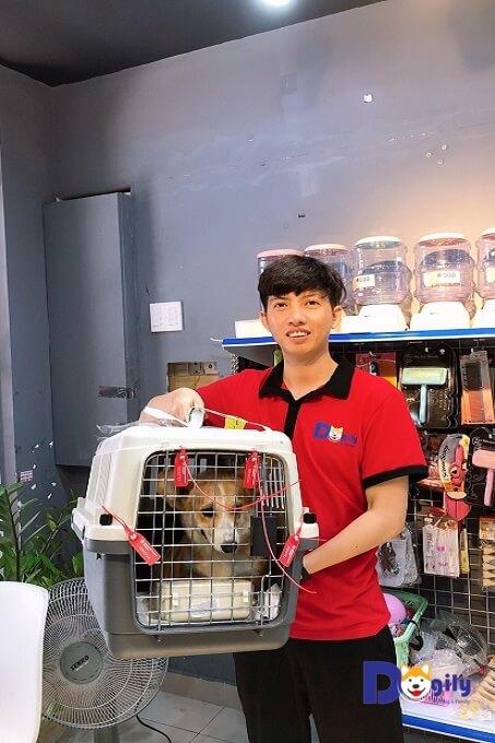 Chó corgi pembroke wales nhập khẩu châu Âu tại Dogily Pet Shop Phú Nhuận, Sài Gòn.