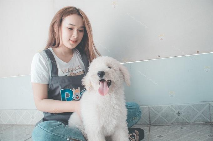 Chó Poodle khổng lồ size standard màu trắng 2 tháng tuổi tại Dogily Petshop Ba Tháng Hai, quận 10.