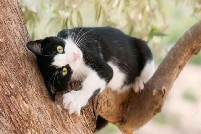 Để đảm bảo sức khỏe cho mèo bạn cần phải dành thời gian cho chúng tập luyện